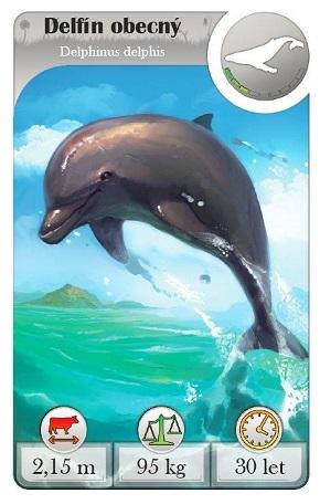 Svět zvířat - delfín