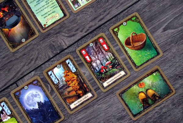 Fungi - připravená hra