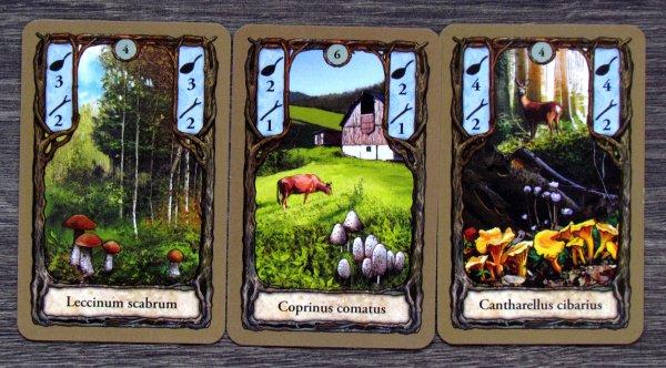 Fungi - karty