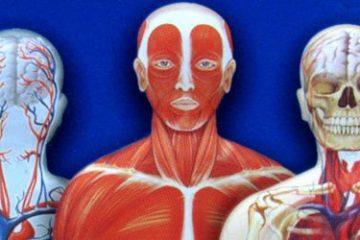 Recenze: Hravé knihy v plechovce - Koně a Lidské tělo