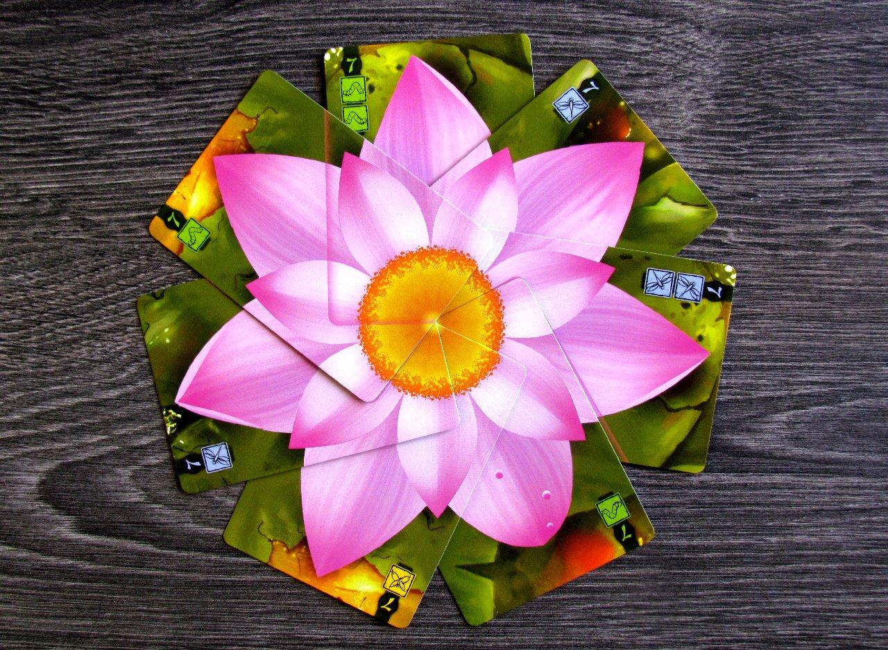Review Lotus Beauty Of Flower Petals Deskovehry Recenze