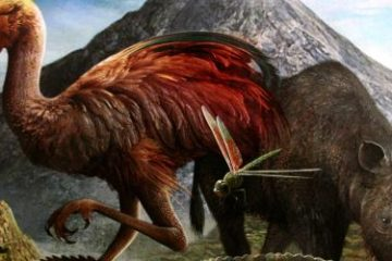 Recenze: Dominant Species Card Game - kapesní příručka pro přežití