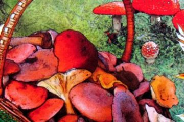 Recenze: Fungi - pojďte na stůl na houby!